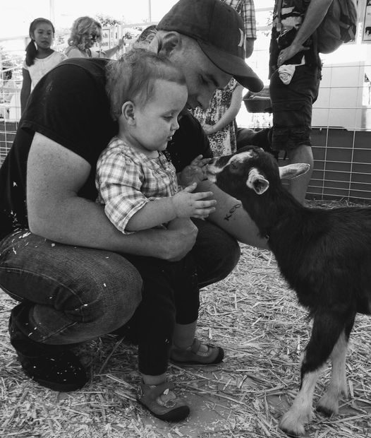 Dad toddler goat
