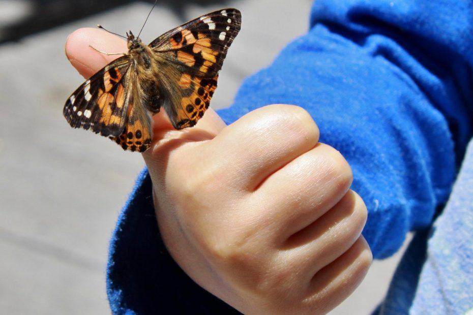 butterfly on boy's finger